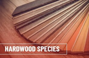 Top 5 popular hardwood species that are irresistibly attractive