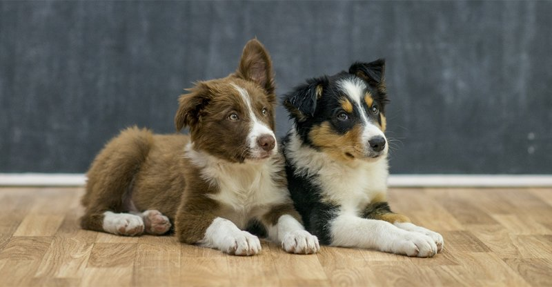 Making Hardwood Flooring dog friendly